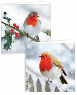 Robin Square Christmas Cards- Pack of 12 0261470