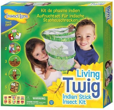 Insect Lore Living Twig Stick Insect Kit  3290148